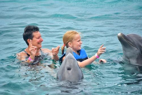 la découverte des dauphins